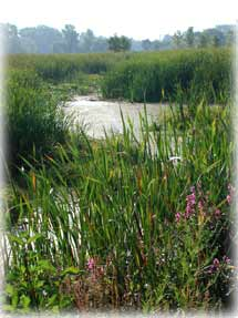 Saginaw Basin Land Conservancy