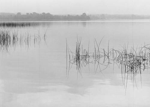 Reeds, Crooked Lake photo by David Lubbers