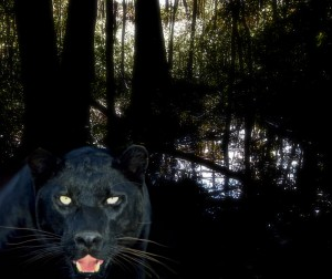 michigan-panther